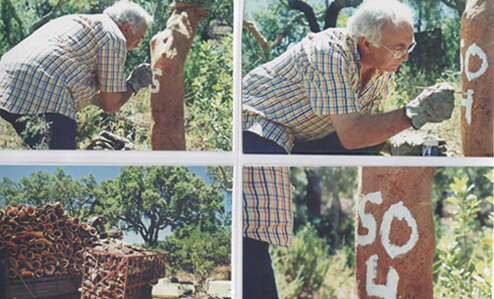 Cork-tree-numbering